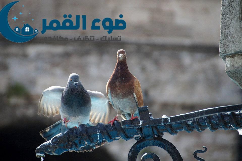 شركة مكافحة الحمام والطيور بالرياض