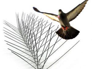 شركة طرد الطيور بالرياض